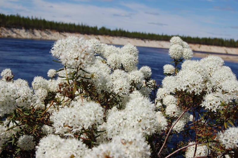 Природа западной сибири весна